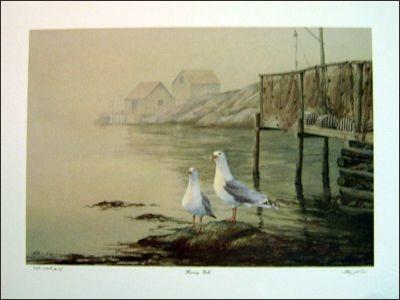 Herring Gulls 00050