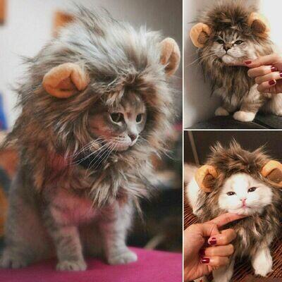 Cat Lion Custom / Gatito Leon Kpop