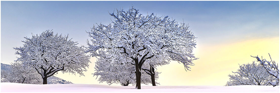 Apple trees at dawn - paralume diametro 25cm h26,5