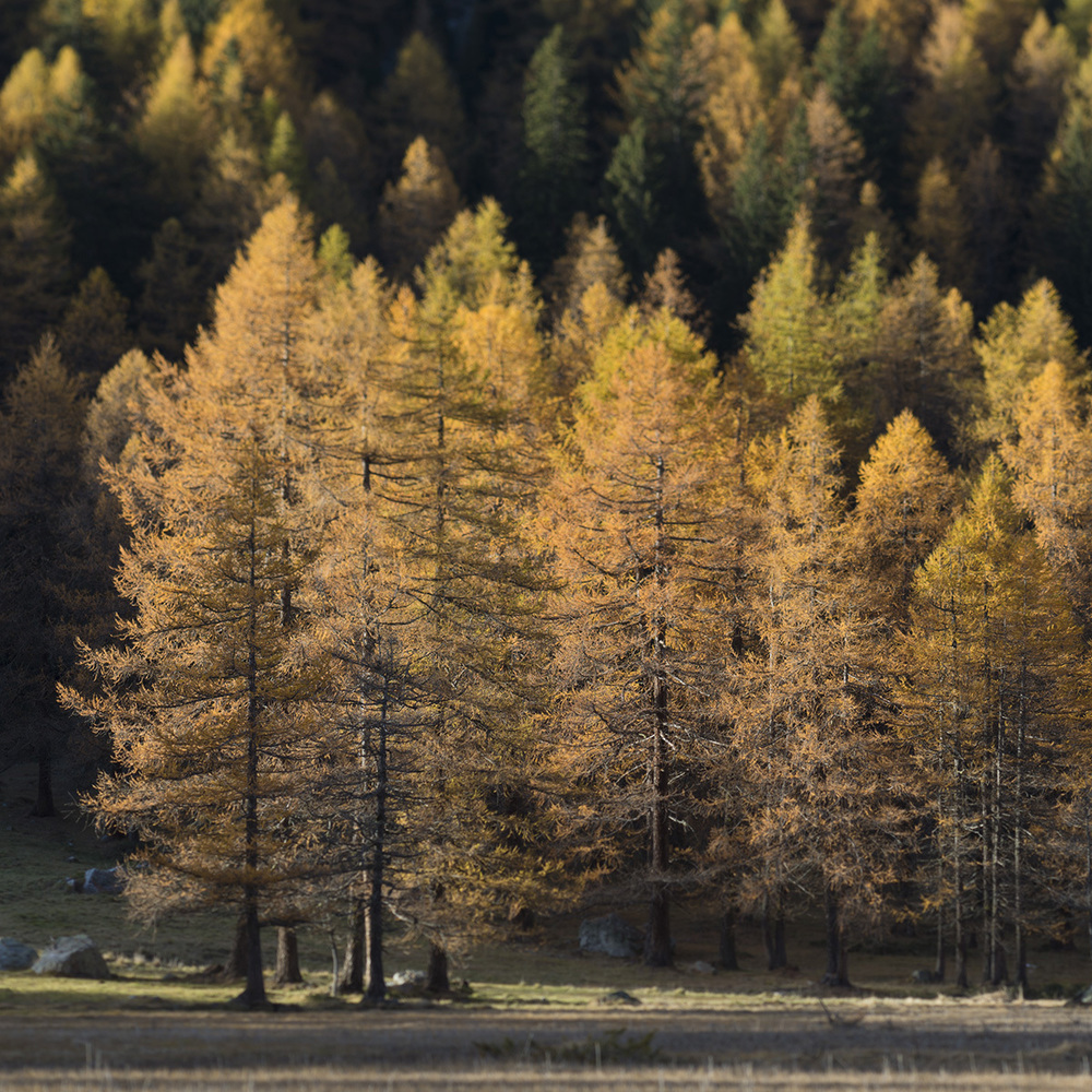 Autunno in Val Ferret