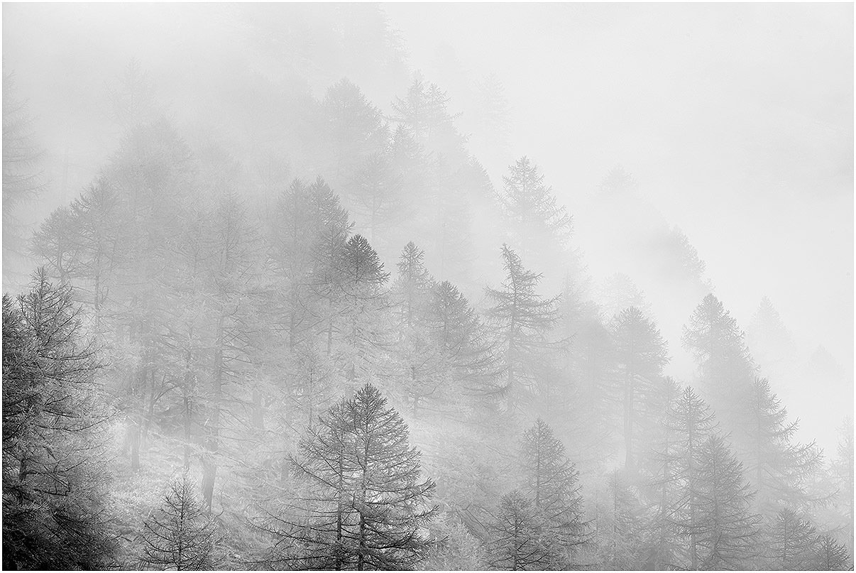 Nebbia tra gli alberi