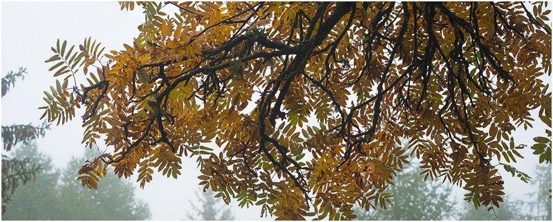 Rami d'autunno