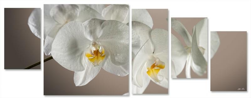 orchidea multiformato 5pezzi / 203x76 cm codice 031