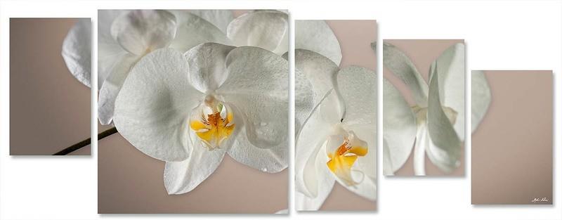 orchidea multiformato 5pezzi / 203x76 cm codice 064