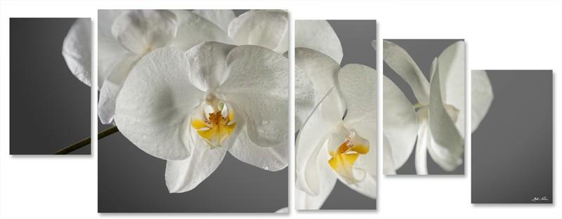 orchidea multiformato 5pezzi / 203x76 cm codice 030