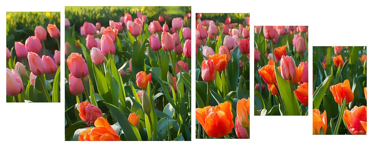Tulipani multiformato 5pezzi / 203x76 cm codice 032