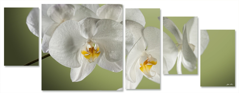 orchidea multiformato 5pezzi / 203x76 cm codice 026