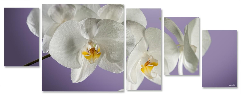 orchidea multiformato 5pezzi / 203x76 cm codice 025