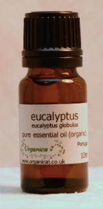 Eucalyptus - blue gum (eucalyptus globulus)