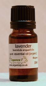 Lavender (lavandula angustifolia) 0E0005