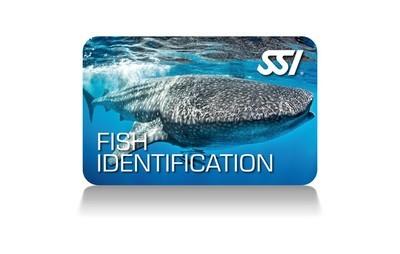 Ecological Diving (Fish ID) / Field Trip to the Sea-Life Aquarium @ Legoland California Resort Sep 28, 2019