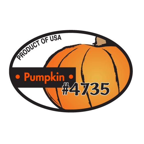 Pumpkin - Regular
