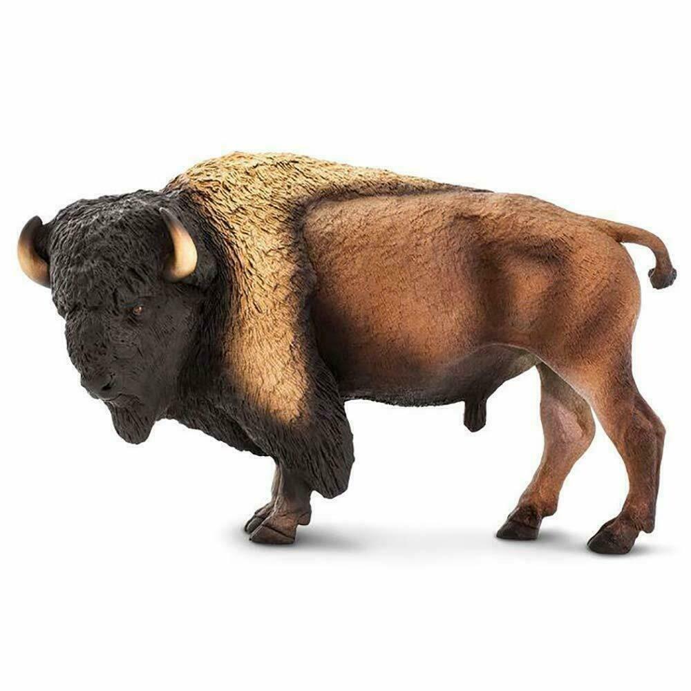 Bison- Wildlife Wonder
