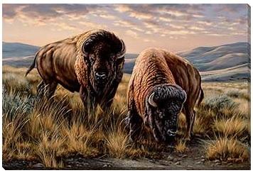 The Landlords - Bison