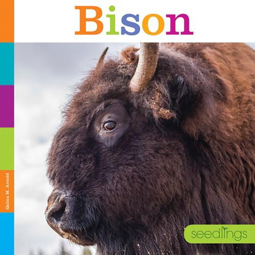 Bison 00000