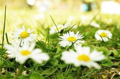 Aromatherapy Spritz Spray - Allergies 'n Sneezing