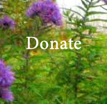 Donation to support Jan Frazier Teachings, in multiples of one dollar