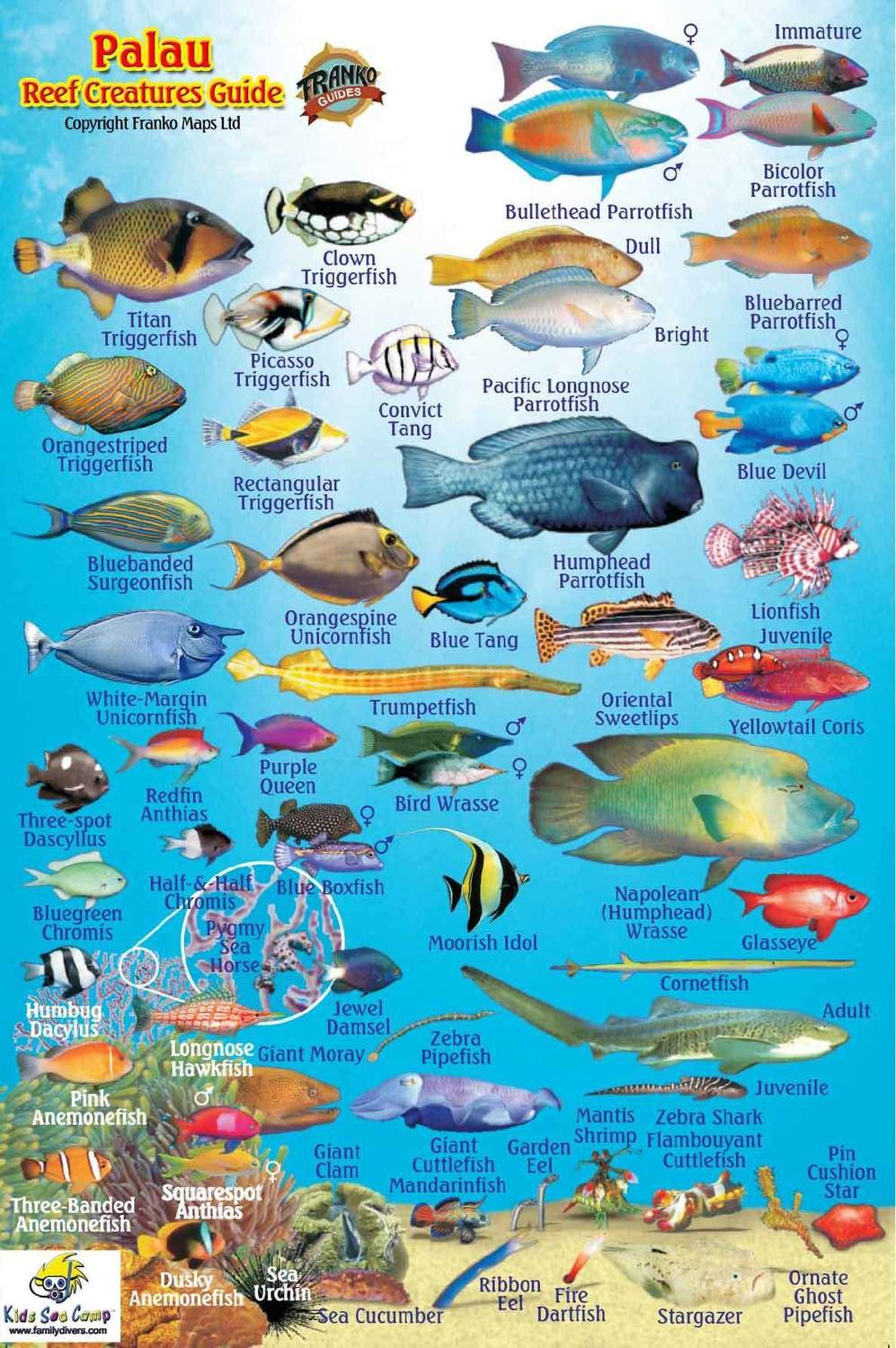 Palau: Reef fish ID card