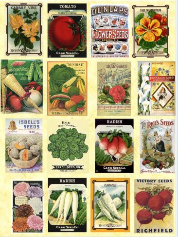 Vintage Seed Packets Image (Download)