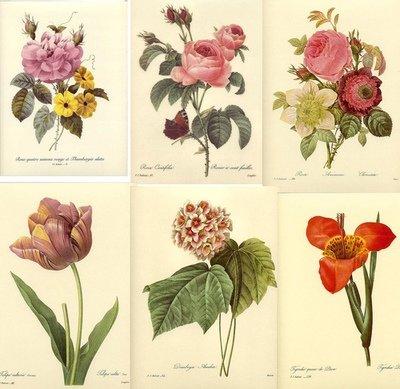 22 Vintage Floral Prints (Download)