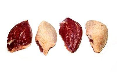 Wilde duif borstfilet