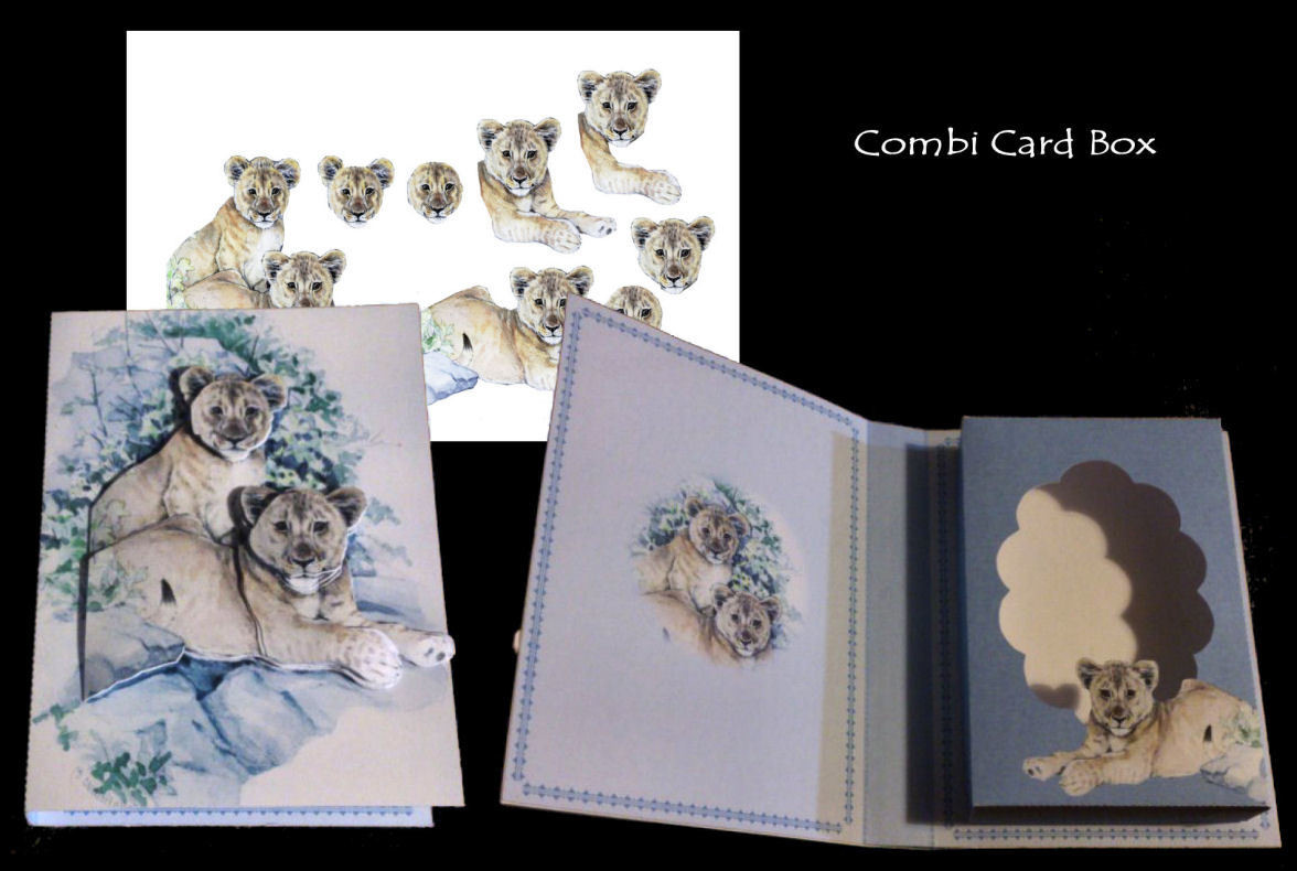 Lion Cubs Combined Card -Box PNC