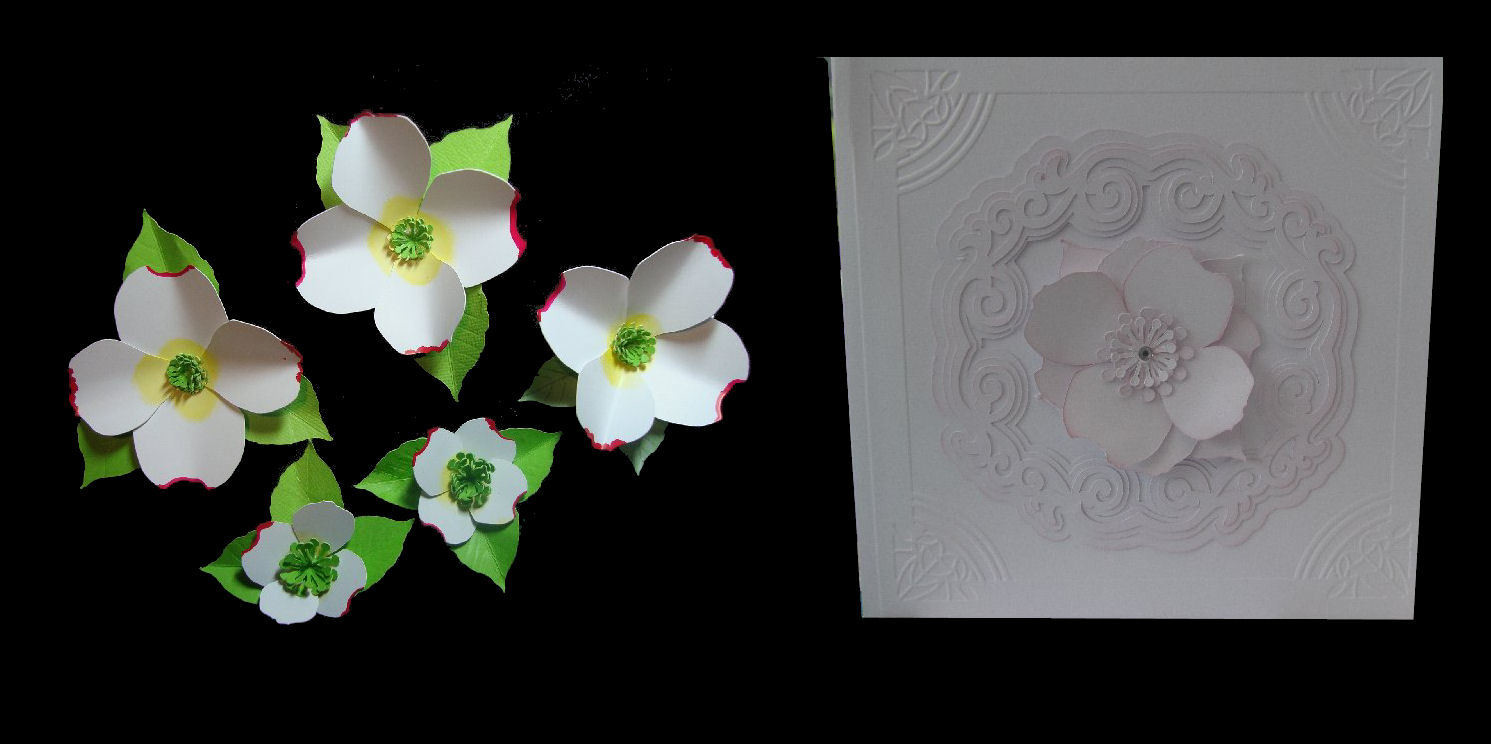 Dogwood  3d flower. . Create your own stunning flowers - FCM  format