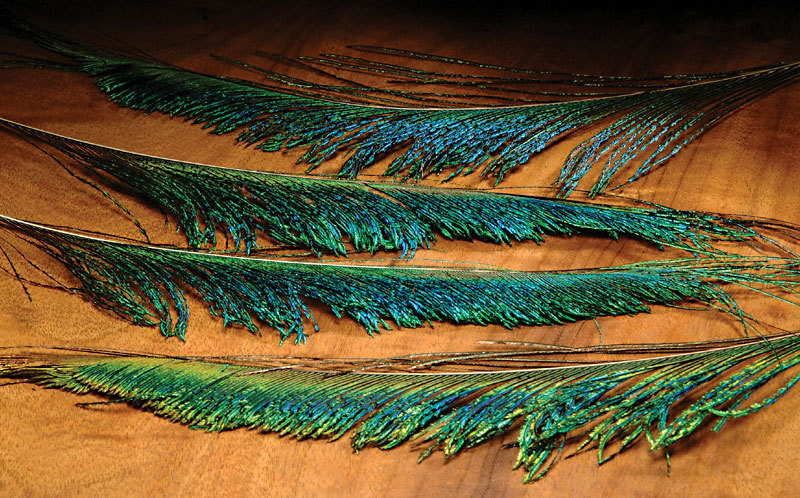 Peacock Swords
