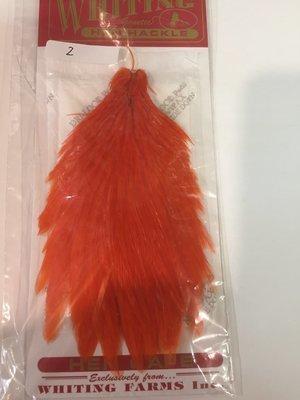 Whiting Hen Neck Orange