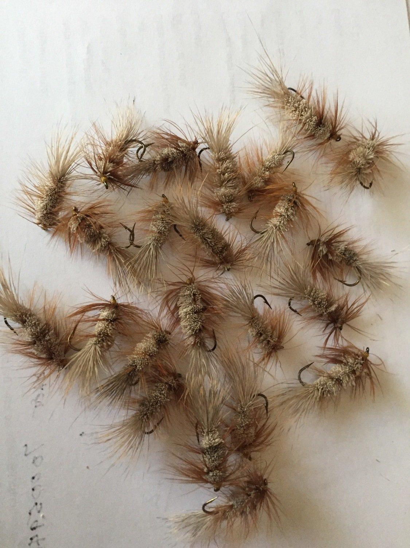 Carter Bug