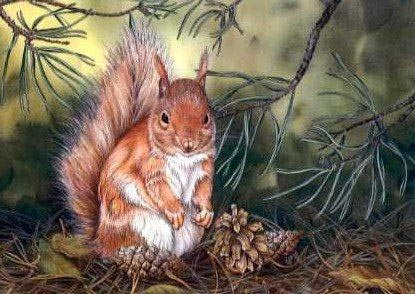 Squirrel and Cones