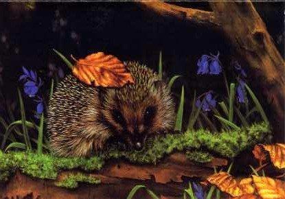 Elle the Hedgehog