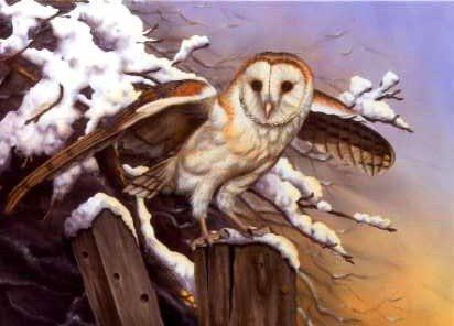 Barn Owl and Snow