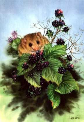 Dormouse and Blackberries