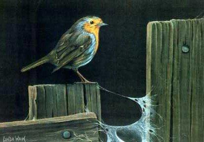 Robin and Cobwebs