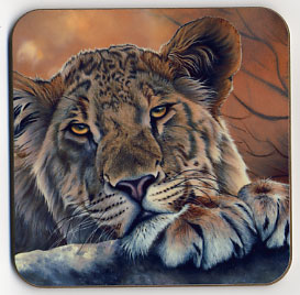 Lioness with Paws. Coaster