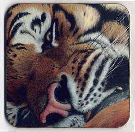Up Close Tiger. Coaster