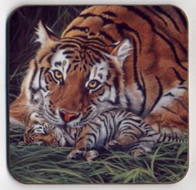 A Tiger's Care. Coaster