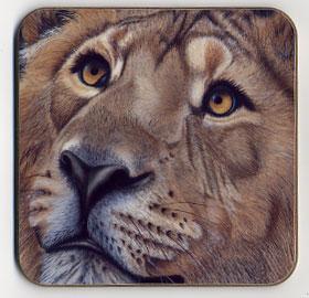 Up Close Lion. Coaster
