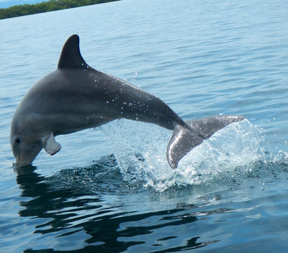 Dolphin Bay 00000005