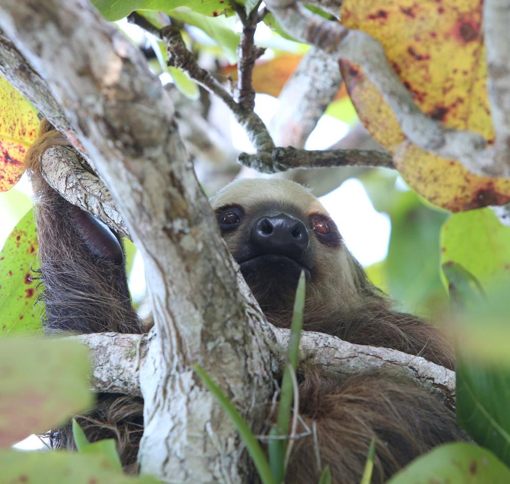 Sloth Island 0000001