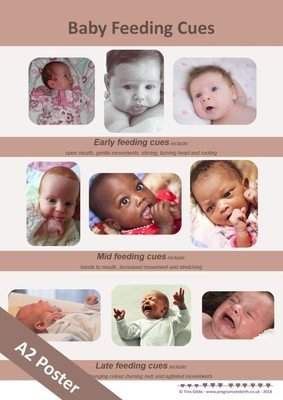 Baby Feeding Cues - A2 poster