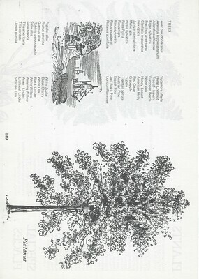 Vintage tree book collage pak