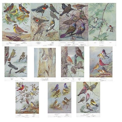 American birds history book collage pak