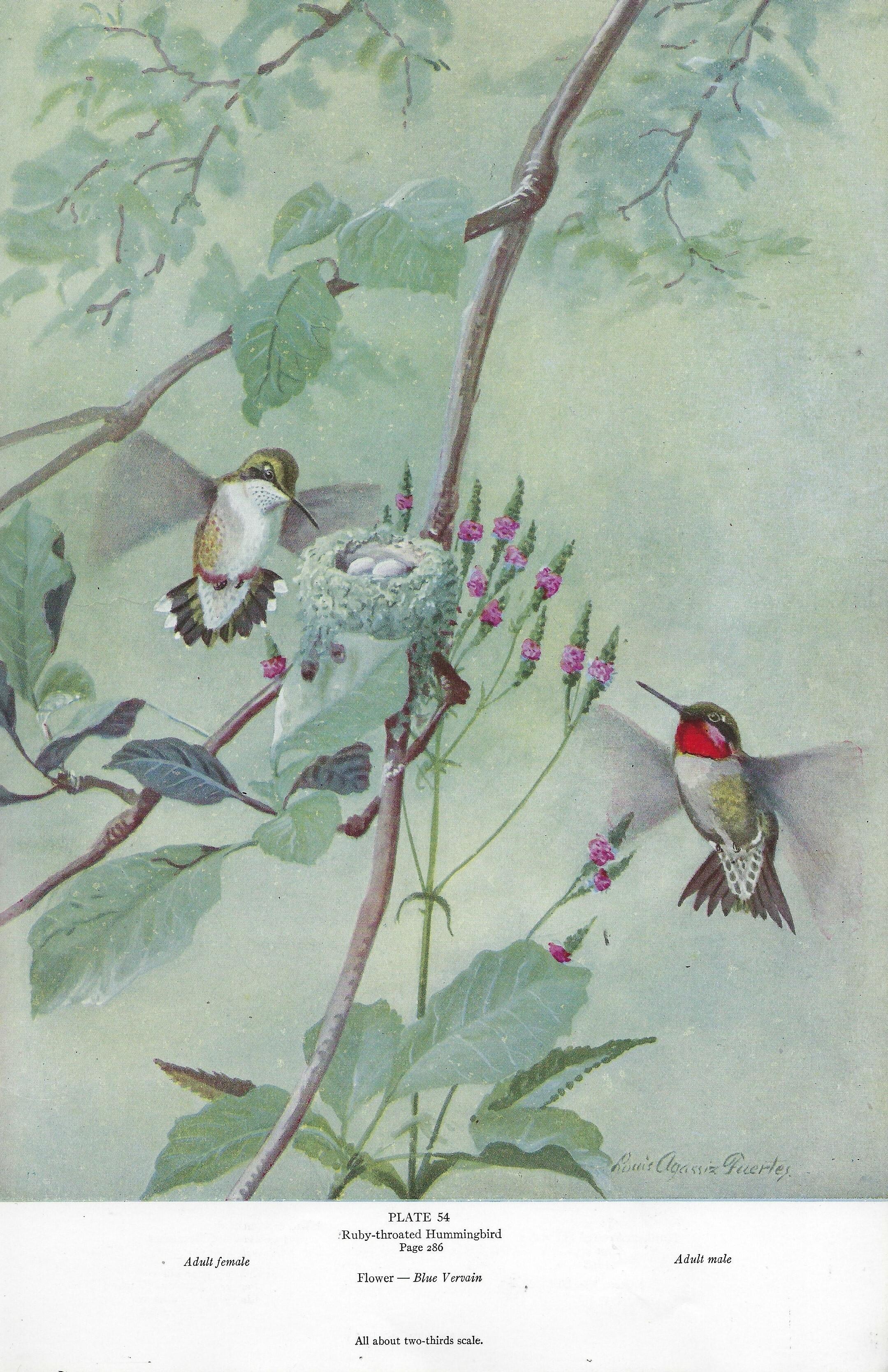 American birds history book collage pak