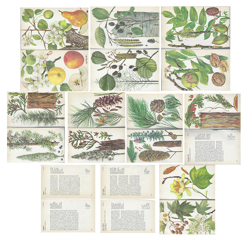 Vintage Guide to trees collage pak ***PRINTED VERSION***