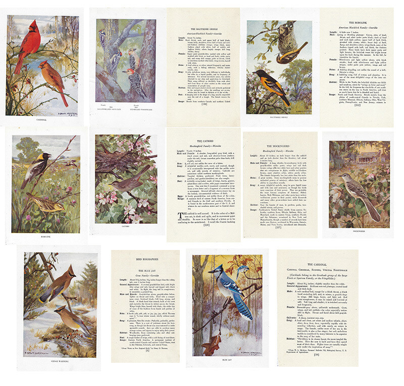 vintage land bird book