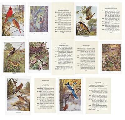 vintage land bird book