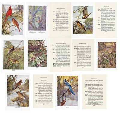 Vintage Land bird book ***PRINTED VERSION***