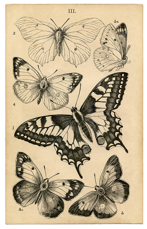 Vintage butterfly collage pak (sunday inspiration 12-3-17) instant download
